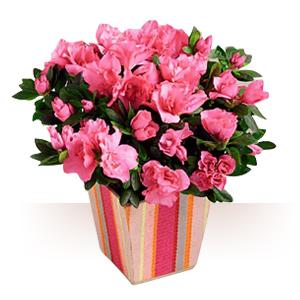 Hot atent. A jefuit victima, apoi i-a trimis flori si un bilet de multumire