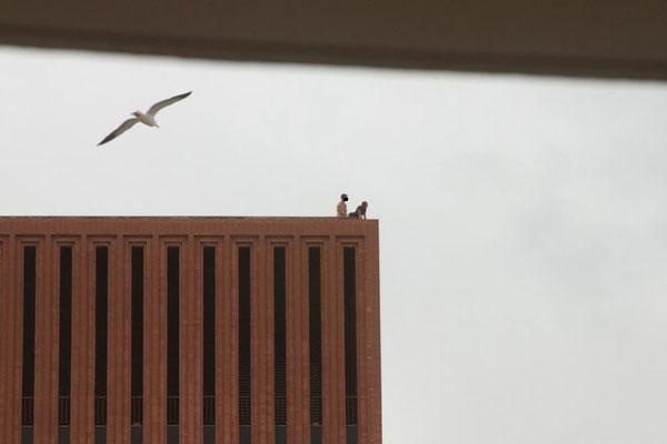 FOTO. Sex pe acoperisul universitatii. Studentul a fost eliminat din fratie