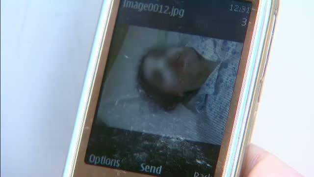 Incident grav la o scoala PRIVATA din Capitala.Eleva de 8 ani, desfigurata in timp ce se afla la ore