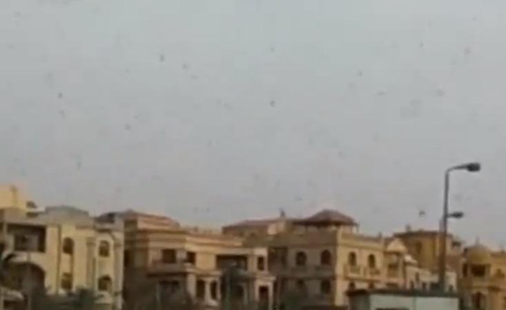 VIDEO. Imagini ca in plagile biblice. Milioane de lacuste au facut pagube in Egipt si Israel