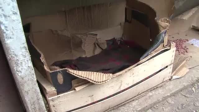 Batuta si alungata din casa de mama, o fata de 13 ani si-a gasit alinare alaturi de cainii vagabonzi