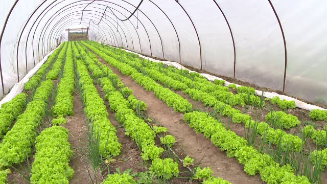 Vesti bune pentru agricultori. Fermierii vor fi ajutati de UE pentru a obtine fructe si legume pe