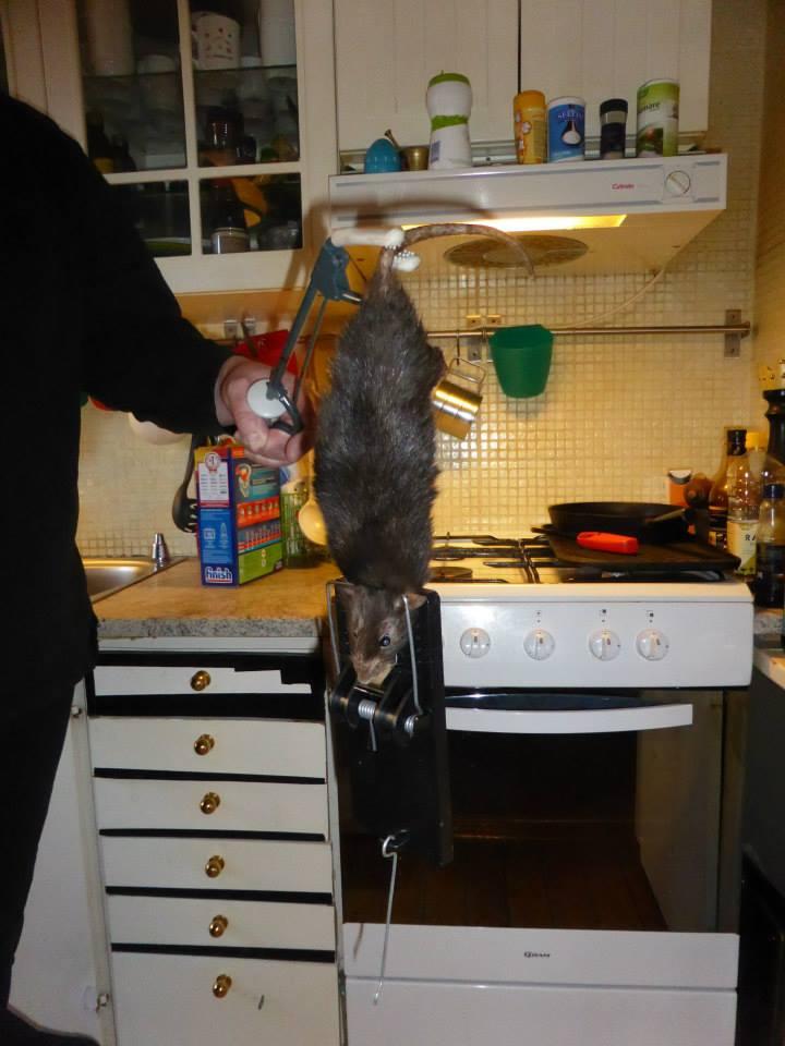 O familie din Suedia a fost terorizata de un sobolan de 40 de centimetri. Cum arata