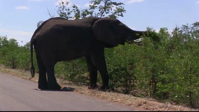 Sute de turiști, salvați de elefanți în inundațiile din Nepal