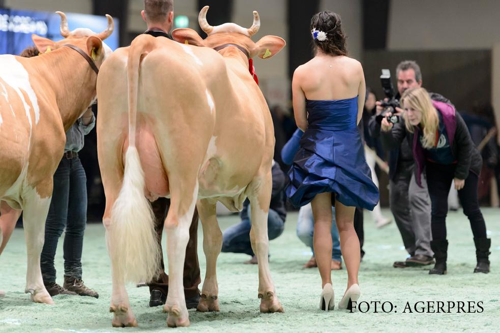 Legatura dintre vaci, poluare si colesterol. Cata carne de vita ne recomanda OMS sa mancam saptamanal