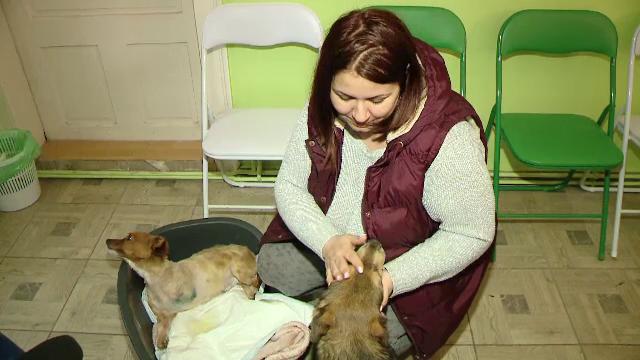 Adoptii in strainatate pentru sute de caini de la noi. Cum vor mai multi oameni cu suflet nobil sa le ajute pe patrupede