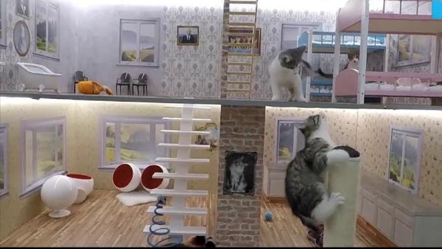 Patru pisici sunt filmate nonstop in cadrul unui reality show din Islanda. Care este rolul acestei campanii