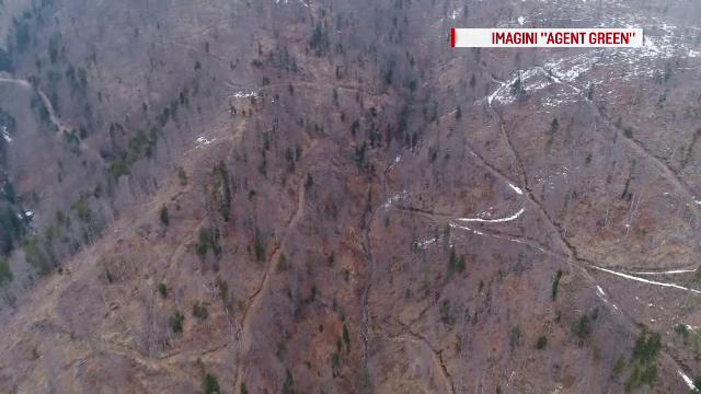 Activistii Agent Green acuza defrisari masive cu ajutorul autoritatilor in zona barajului Vidraru. Reactia Romsilva