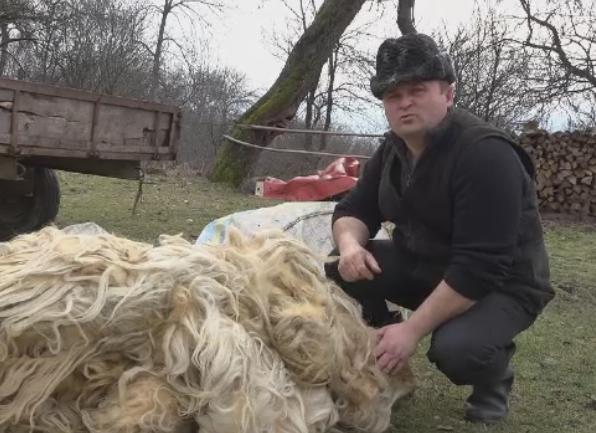 Oierii nu au cui sa vanda lana si prefera sa o arda. Planul ministrului Agriculturii pentru a revitaliza industria