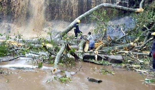 Tragedie nationala in Ghana, dupa ce un copac s-a prabusit intr-o cascada vizitata de turisti. Cel putin 18 elevi au murit