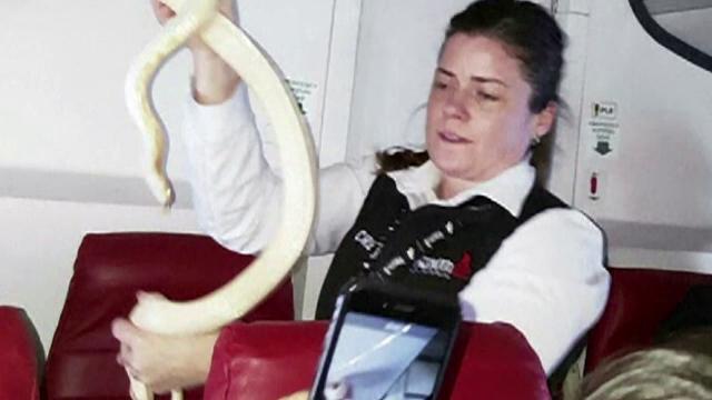 Pasageri dintr-un avion pe o cursa interna in SUA, speriati de un sarpe care se plimba printre scaune