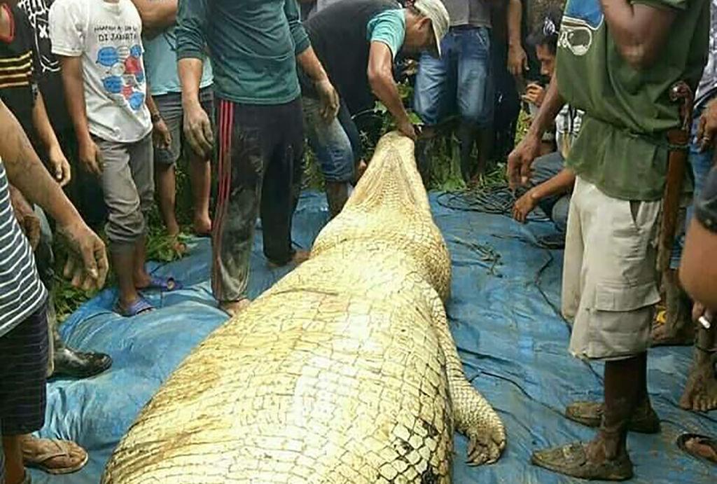 Crocodil de 6 metri, ucis în Indonezia. Descoperire șocantă în stomacul său. FOTO