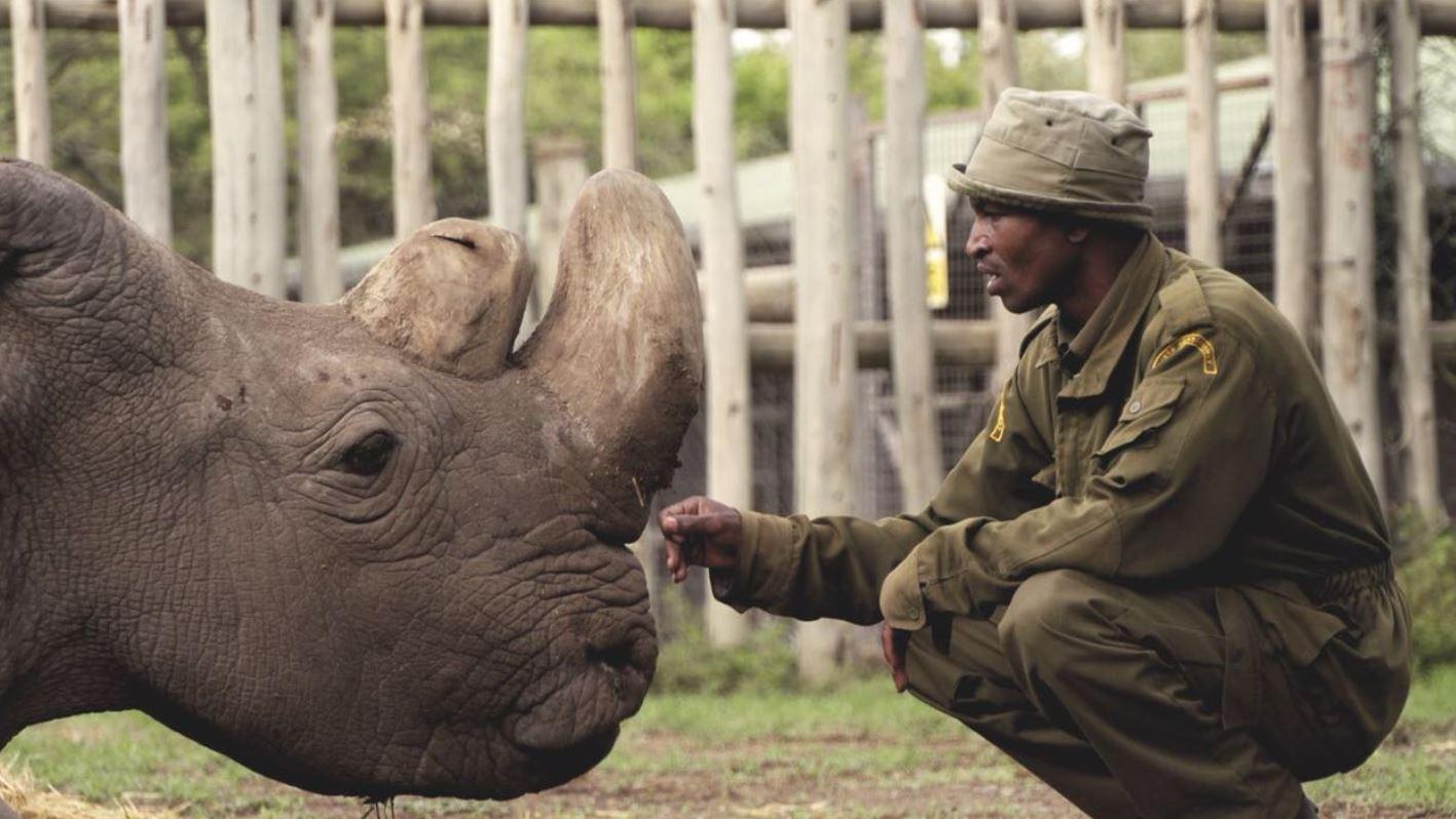 Ultimul mascul de rinocer alb, păzit cu armele, a murit