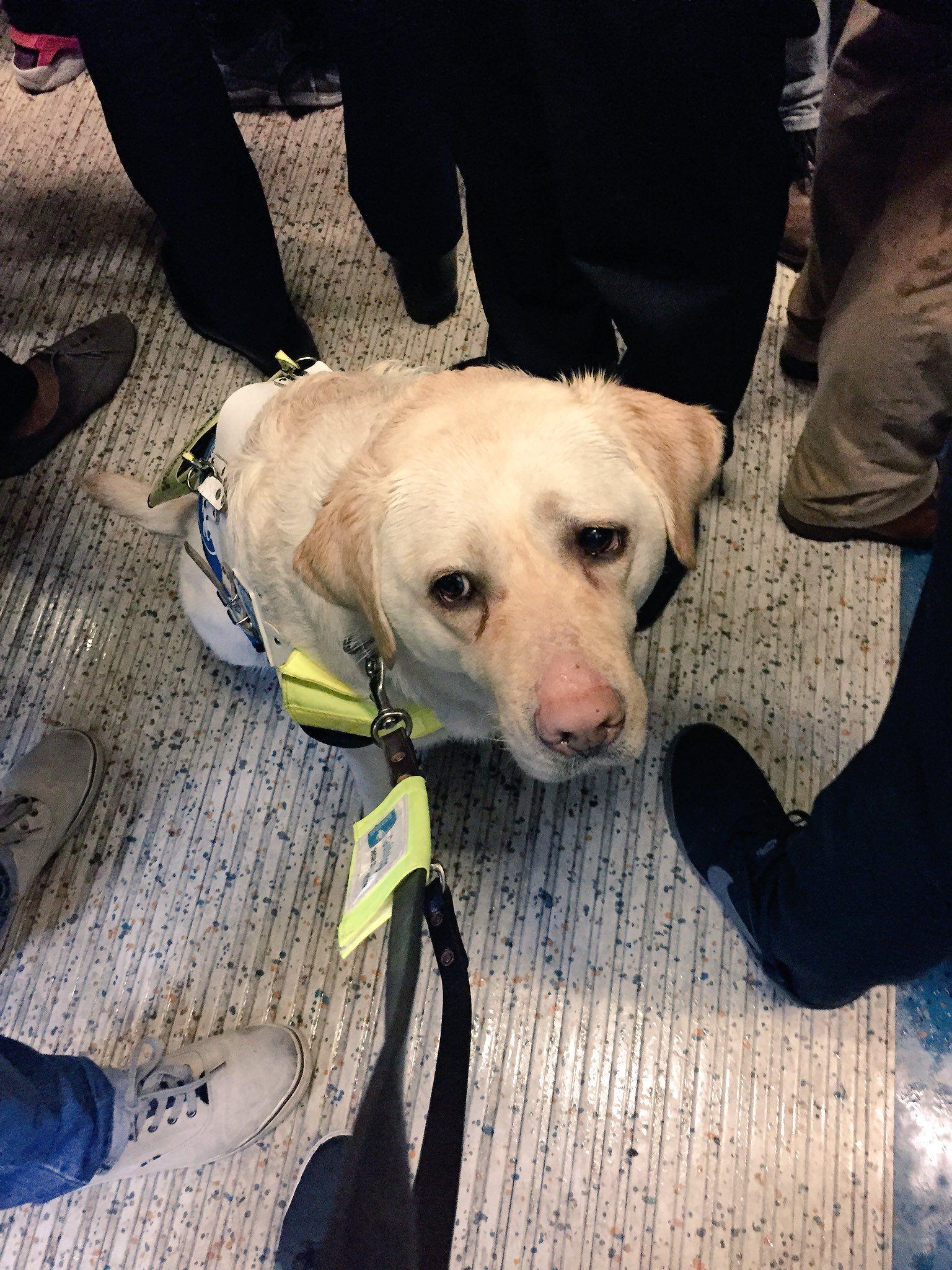 Nevăzător umilit în metroul din Londra. Călătorii nu l-au lăsat să stea jos
