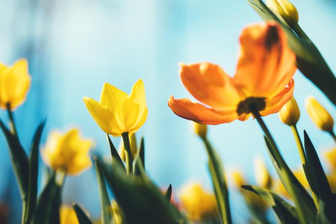 Mesaje de Florii. Ce le poți transmite celor dragi în această zi sfântă