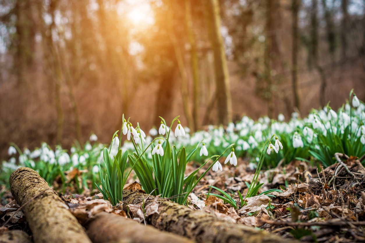 Vremea azi, 30 aprilie. Temperaturi ridicate pentru această perioadă, cu maxime de 25 de grade