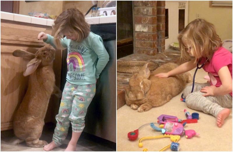 Un iepure gigant este cel mai bun prieten al unei fetițe de 3 ani. GALERIE FOTO