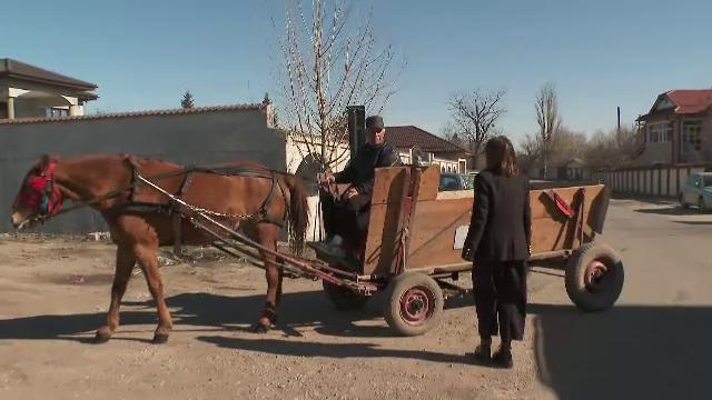 Așa arată un taxi în România anului 2020. Cât a plătit Paula Herlo pentru o cursă cu un cal