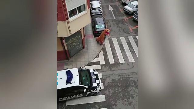 Un bărbat s-a costumat în dinozaur pentru a fenta carantina impusă în Spania
