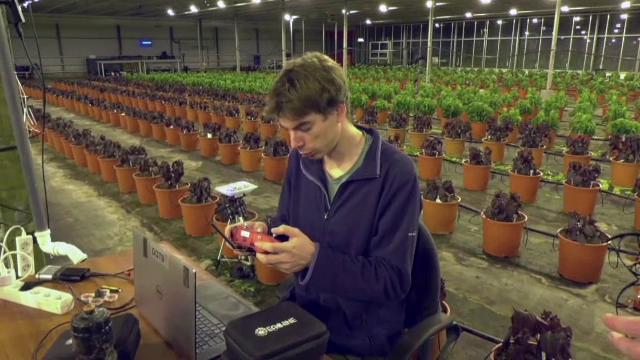 Drone la vânătoare de molii. Soluția unei companii olandeze pentru a proteja culturile din sere
