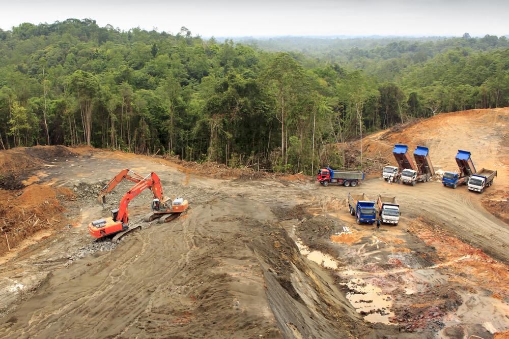 Oamenii au degradat sau distrus peste 60% din pădurile tropicale ale lumii