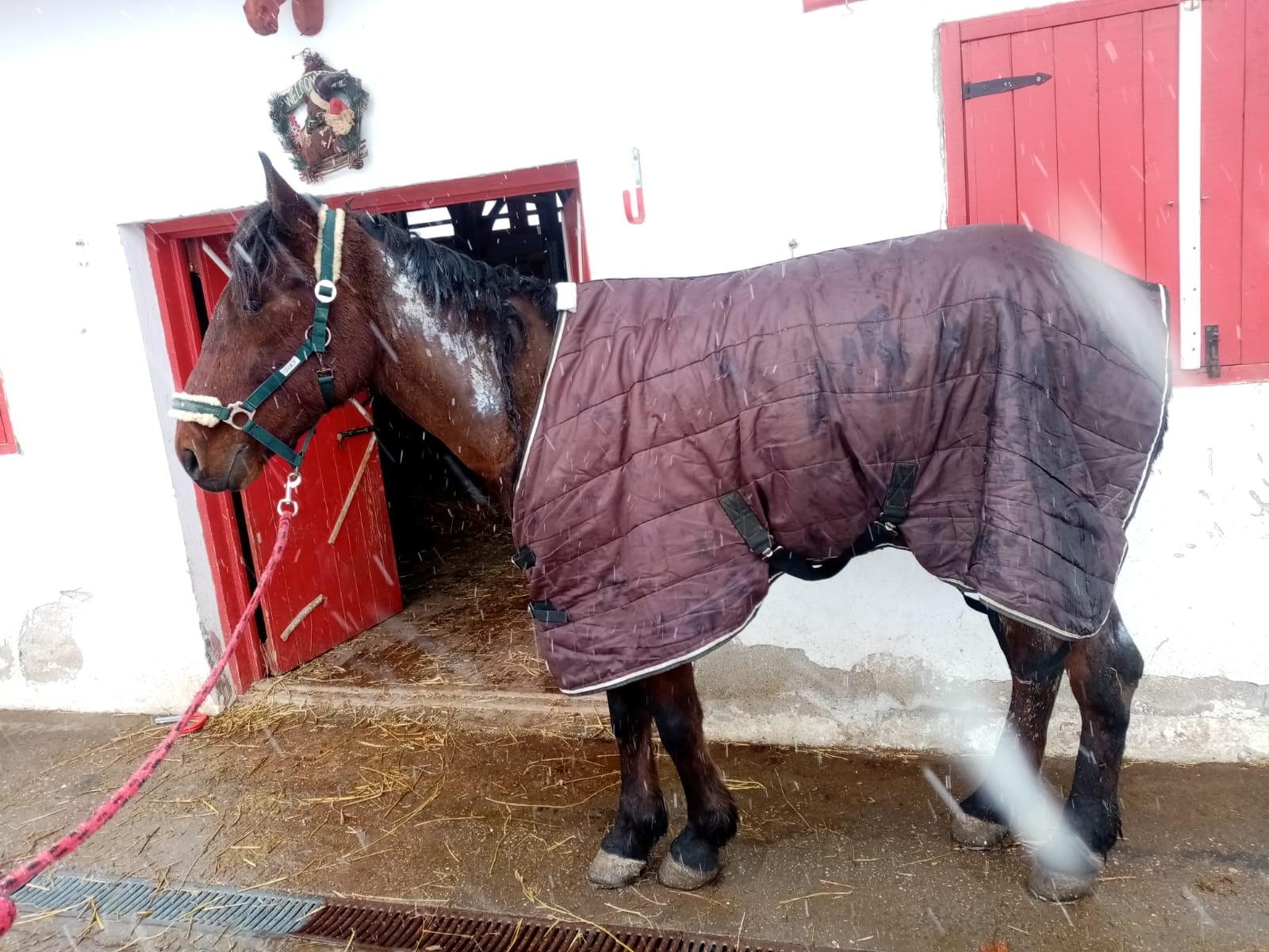 Un bărbat din Ilfov și-a înhămat calul la căruță și i-a dat foc. A fost internat la psihiatrie