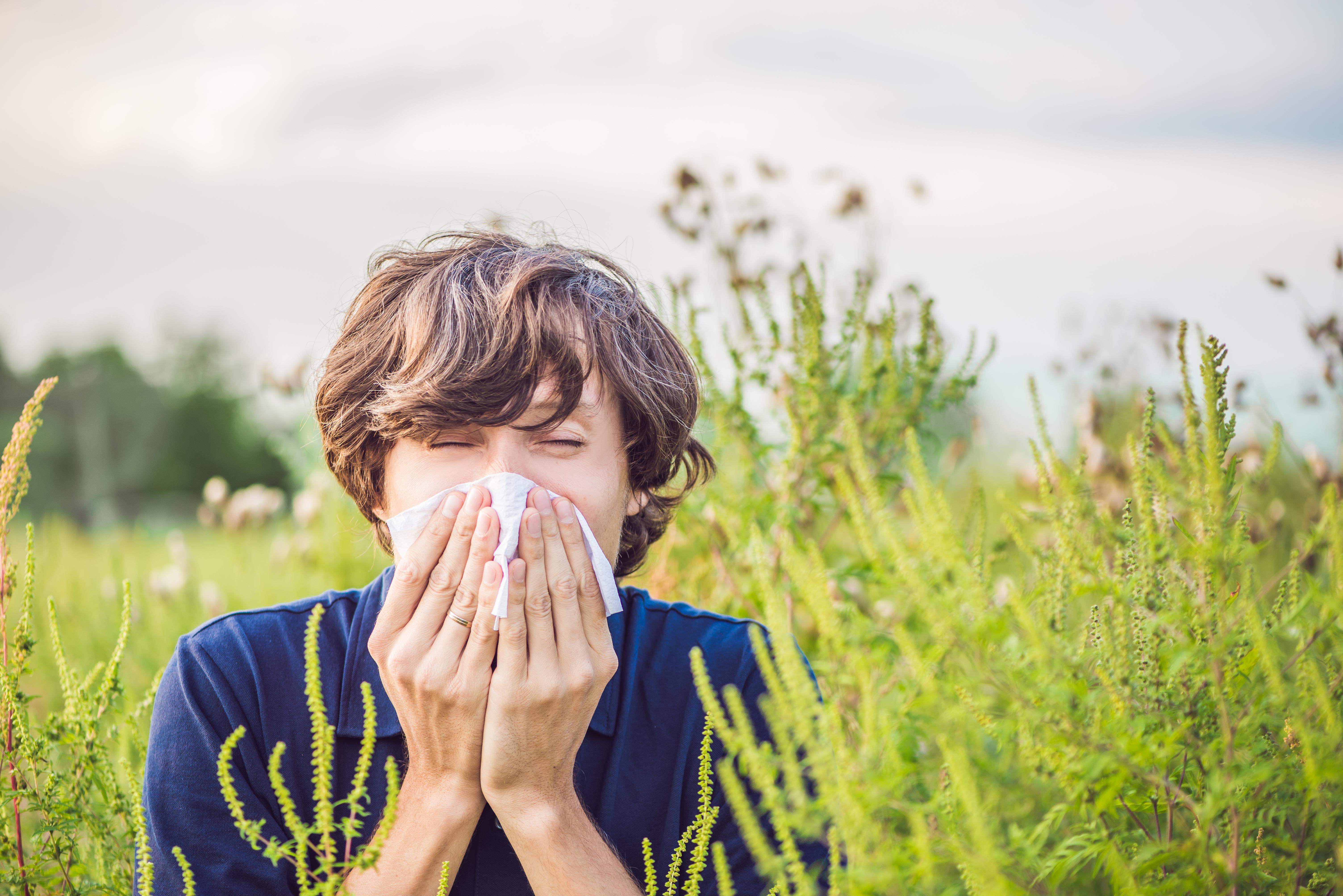 Studiu: Concentraţiile ridicate de polen din aer contribuie la creşterea ratei de infectare cu coronavirus