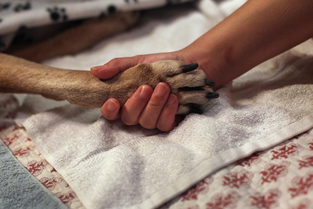 Zeci de câini morți, descoperiți la un adăpost canin din Bacău. Unii au fost băgați de vii în saci și lăsați să se sufoce