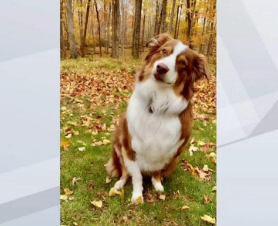 Accident rutier provocat de un câine în SUA. Animalul a intrat cu o mașină într-o clădire