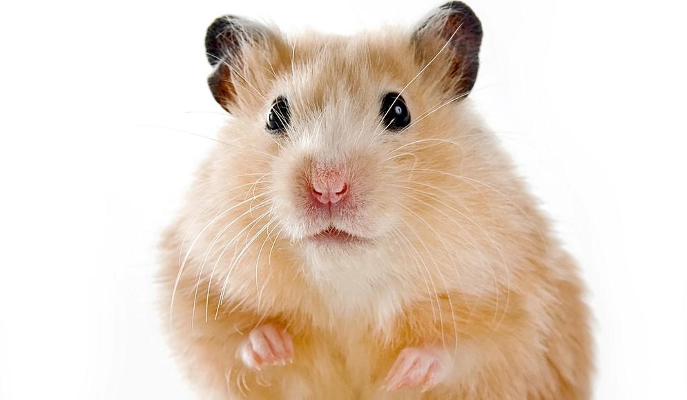 China a aprobat al 5-lea vaccin anti Covid-19, care va fi făcut din celule de hamster