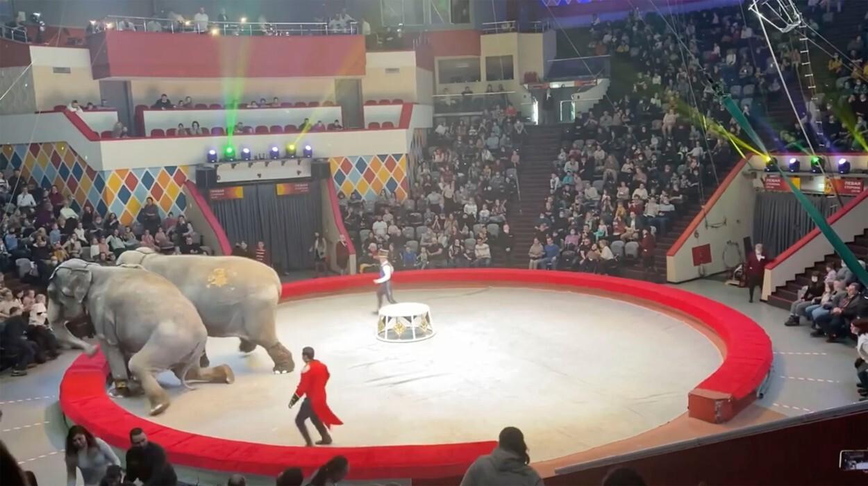 Spectatorii au fugit speriați de la un spectacol de circ după ce elefanții au devenit agresivi. VIDEO