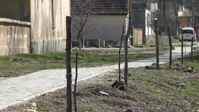 Zeci de nuci plantați de o primărie din Arad au fost rupți sau furați. Ce spun autoritățile