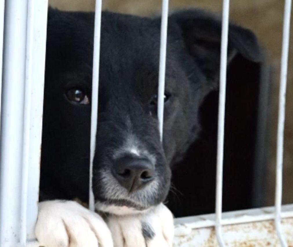 Poliția animalelor nu are unde să ducă vietăţile salvate. Autorităţile nu au bani pentru adăposturi