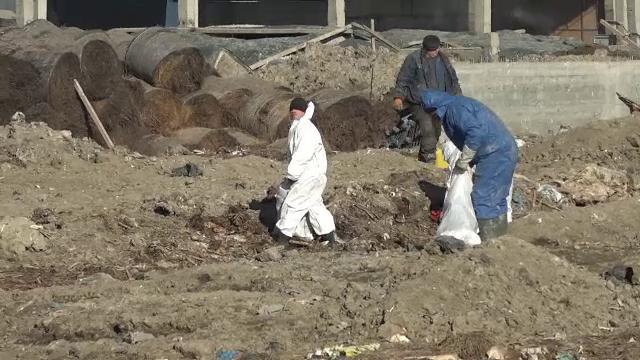 Control judiciar pentru proprietarul incineratorului care nu a ars oile de pe nava eşuată, ci le-a îngropat