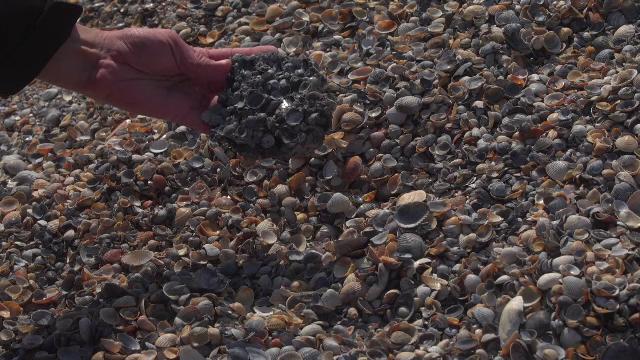 Operațiunea de lărgire a plajei din Mamaia a scos la iveală roci vechi de 30.000 de ani