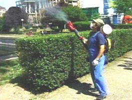 Actiune de dezinsectie pe domeniul public si privat in Cluj-Napoca