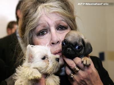 Brigitte Bardot apara din nou cainii vagabonzi din Bucuresti