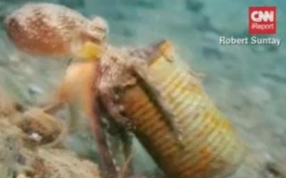 Imagini uimitoare cu caracatita ce se crede melc. Ce are pe post de cochilie