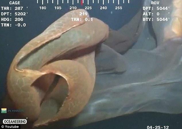 Descoperire la 5200 de metri adancime. O camera a unui submarin a surprins un monstru marin. VIDEO