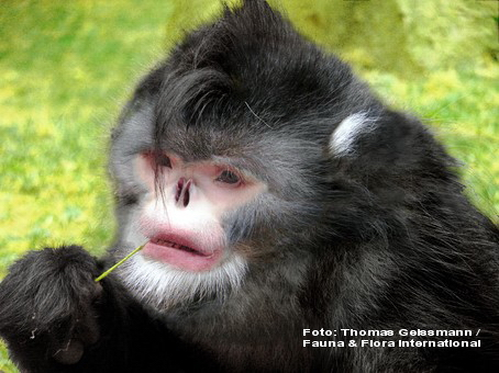 Viespea parazit, maimuta care stranuta, tarantula albastra - TOP 10 specii noi, descoperite pe Terra