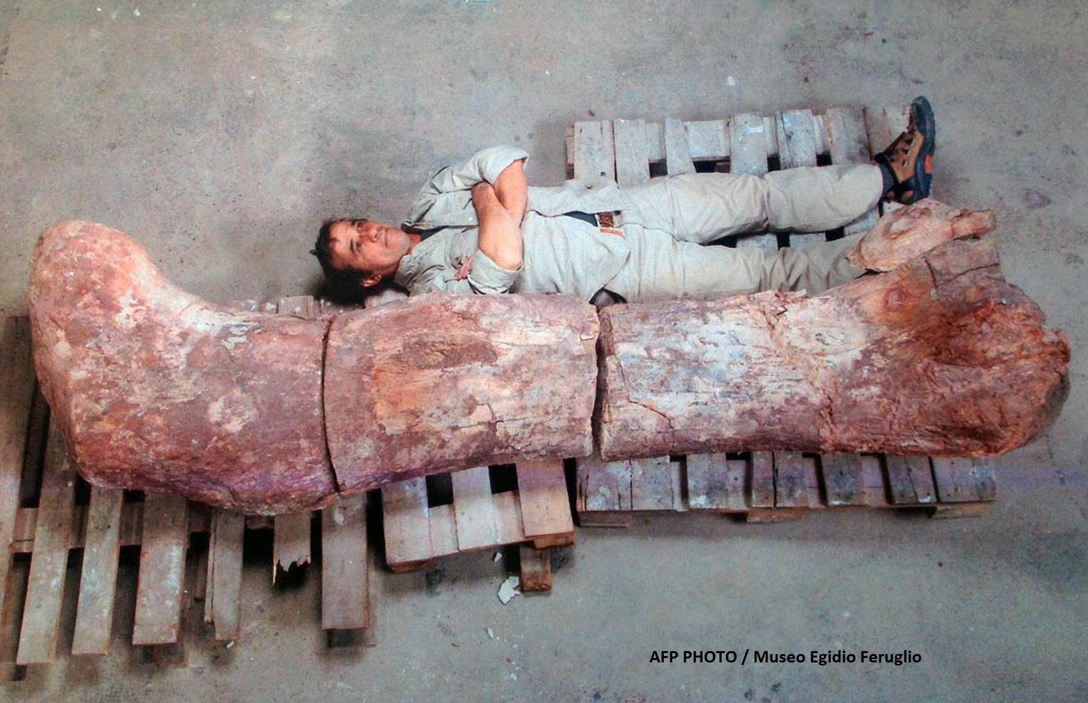 Galerie foto.Cel mai mare dinozaur descoperit vreodata are 40 de metri lungime.Scheletul sau a fost gasit recent in Argentina