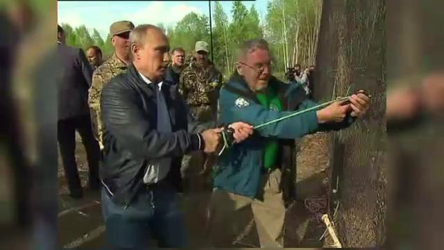 Vladimir Putin a eliberat doi tigri de Amur. Televiziunea nationala a transmis intregul moment