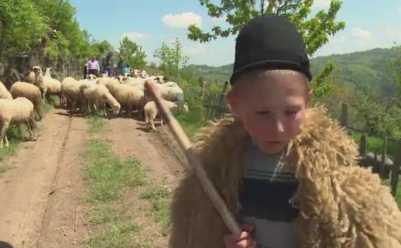 Copiii muntilor. La 12 ani, isi doresc sa devina ciobani si sa traiasca la stana: