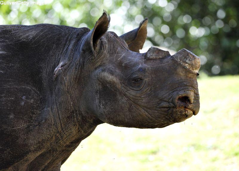 Peste 2.000 de coarne de rinocer, arse în India pentru a transmite un mesaj împotriva comerţului ilegal