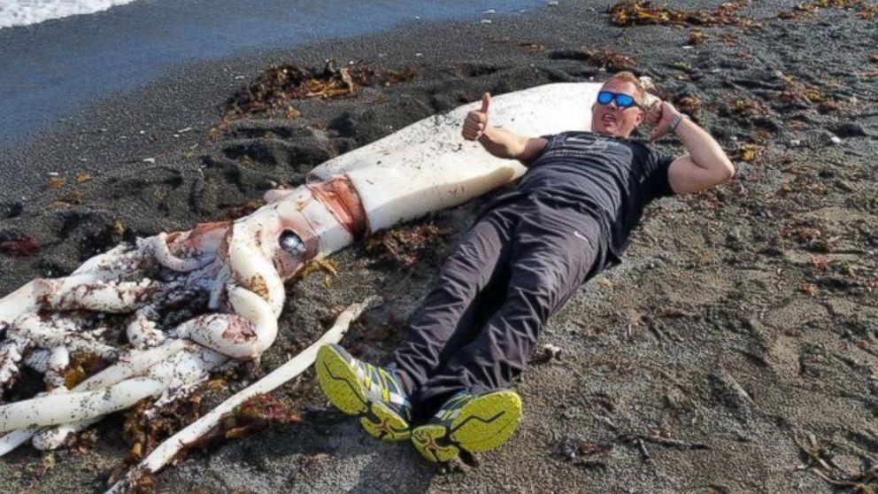 Un calamar gigantic a fost descoperit pe o plaja in Noua Zeelanda