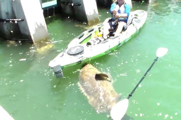 Video viral. Ce s-a intamplat dupa ce un pescar cu un caiac a reusit sa prinda un peste urias