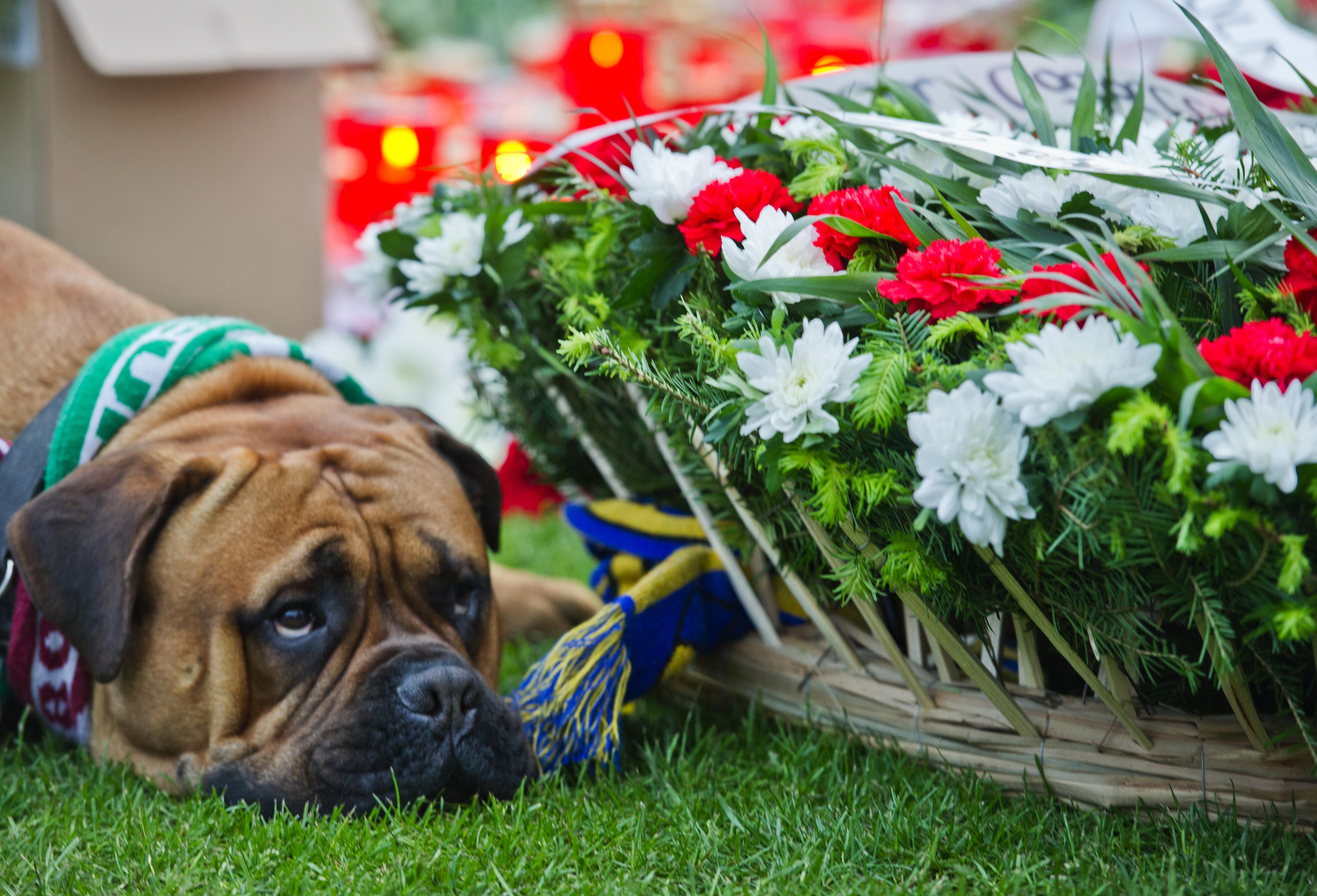 Imaginea zilei in Stefan cel Mare. Oamenii au venit la stadionul Dinamo cu flori, lumanari si bannere si dupa caderea noptii