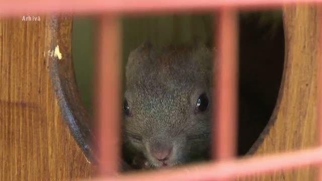 Protest in Bistrita pentru eliberarea ultimei veverite ramase intr-o voliera din parc:
