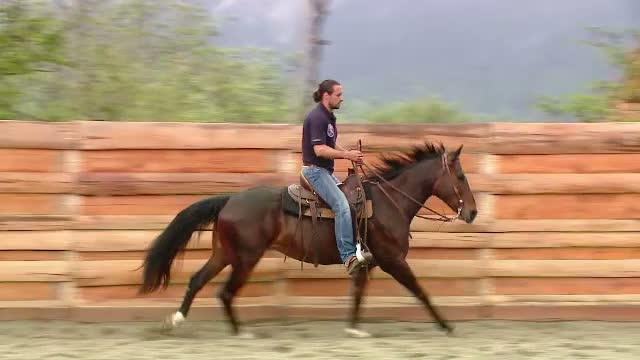 Uma, calul salvat de actorul Denis Stefan, a devenit speranta Romaniei la Campionatul European de Dresaj Western