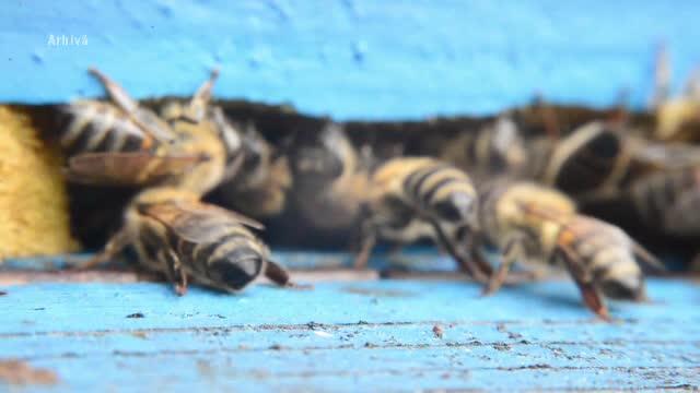 Tragedie la o gradina zoologica din Prahova. Un om a murit dupa ce a fost intepat de cea mai mare specie de viespe din Europa
